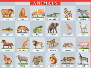plakat_animals